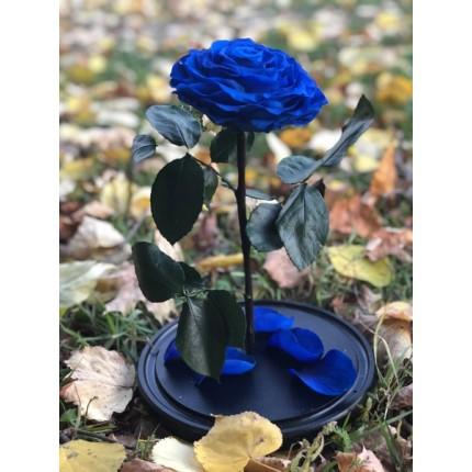 Синяя роза-кинг в колбе