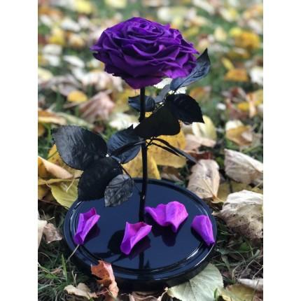 Фиолетовая роза-кинг в колбе