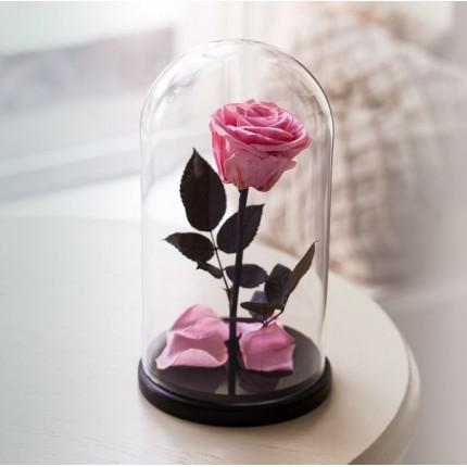 Нежно-розовая роза в колбе